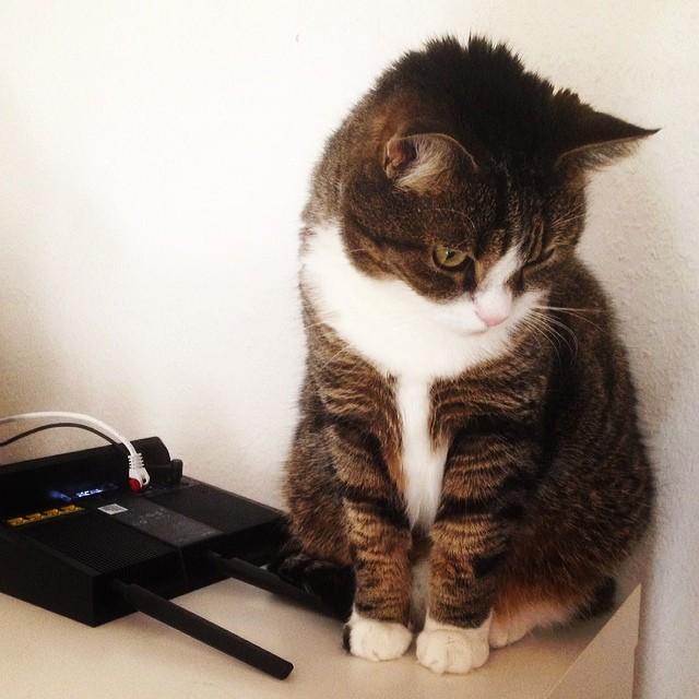Luca fühlt sich schuldig, weil er den Router umgeworfen hat.