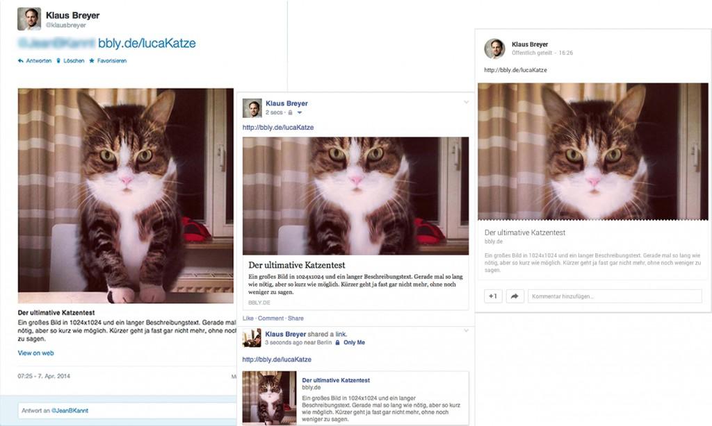 Verschiedene Ausschnitte von Luca der Katze